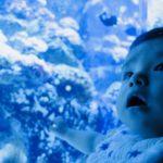 【2020年OPEN】「Dmmかりゆし水族館」の最新情報をチェック!